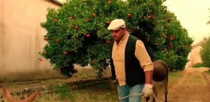 Bandite Muccino dalla Calabria
